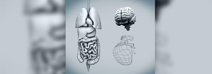 Leaky Gut Raises Risk Of Artery Plaque and Heart Disease in Cornelius