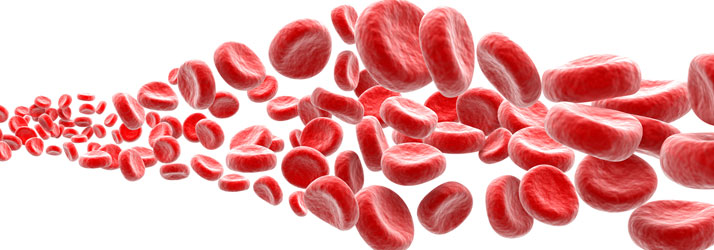 Lake Norman Integrative Wellness in Lake Norman Blood Cells